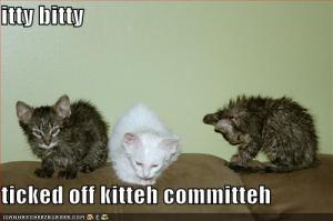 funny-pictures-wet-kittens-are-upset